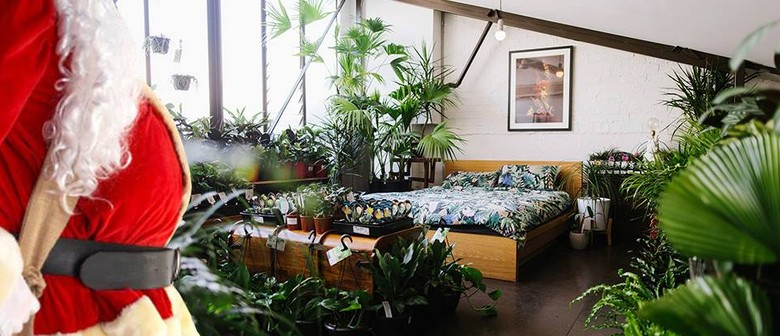 Indoor Plant Warehouse Sale – The Last Hoorah