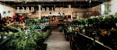 Indoor Plant Warehouse Sale – Summertime Madness