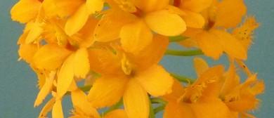 Aspley Orchid Society Summer Show