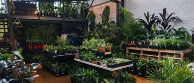 Indoor Plant Warehouse Sale – Tropicana Part