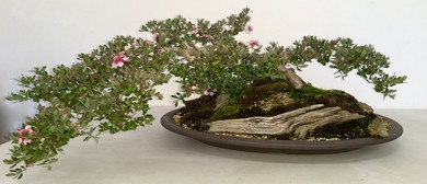 2019 Australian Native Bonsai Exhibition