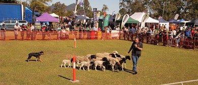 Tiaro Farming and Lifestyle Field Day