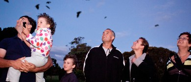 Get Fit for Bats – The Big Bat Walk