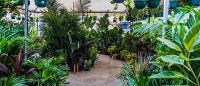 Variegated Plant Party – En Blanc