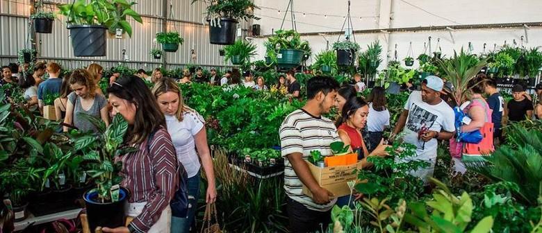 Rare Plant Party En Blanc