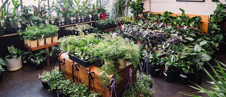 Indoor Plant Warehouse Sale – Pet Friendly Focus