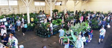 Indoor Plant Warehouse Sale – Rumble In the Jungle