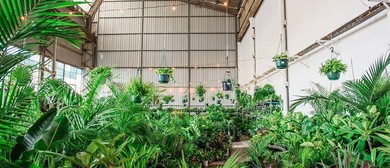 Mega Indoor Plant Warehouse Sale In the Burbs