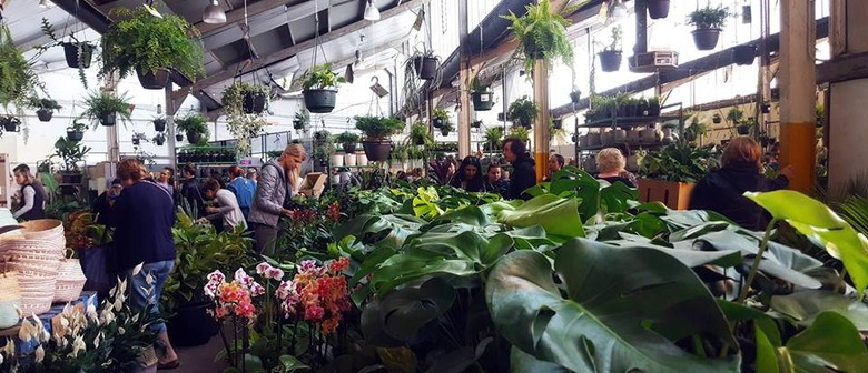 Indoor Plant Warehouse Sale