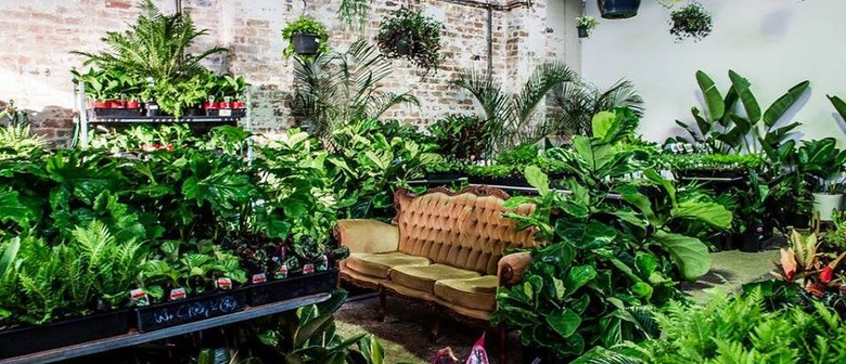 Indoor Plant Sale – Mother's Day Special