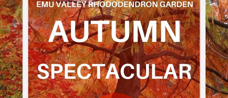 Autumn Spectacular