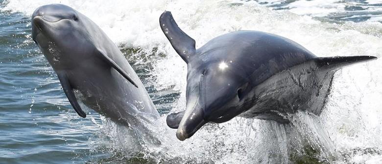 Dolphin Cruises - Mandurah - Eventfinda