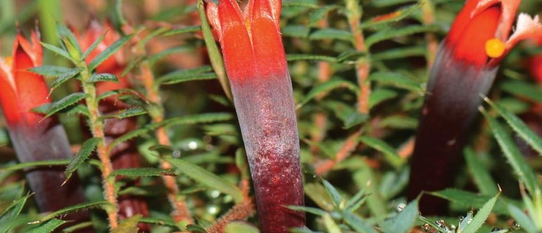 Noongar Bush Medicine: Medicinal Plants From the South West