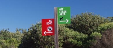 Off Leash Area – The Stray Dogs