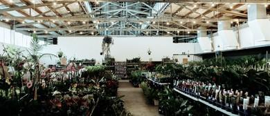 Indoor Plant Warehouse Sale – Winter Wonderland