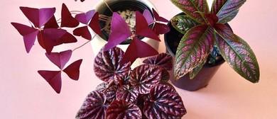 Indoor Pink Plant Party