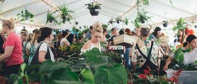 Indoor Plant Warehouse Sale – Pet Friendly