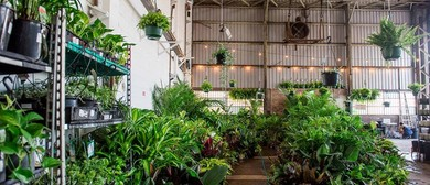 Indoor Plant Warehouse Sale – Low Light Party