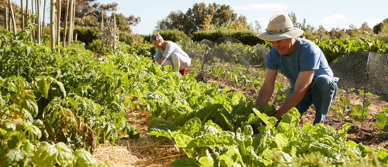 Vivid Ideas – Horticultural Therapy