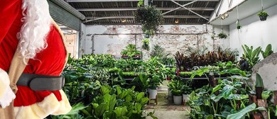 Huge Indoor Plant Sale – Christmas In July