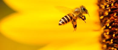 Beekeeping – An Introduction – To Flow Or Not to Flow