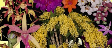 9th Native Orchid Conference & Show