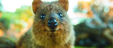 Rottnest Island: Kingdom of the Quokka