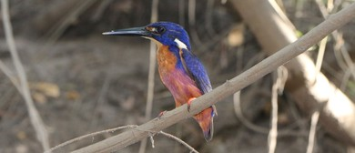Kakadu Bird Week