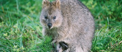 Quokka Birthday Party