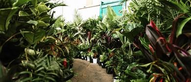 Indoor Plant Sale – Springtime Splendour