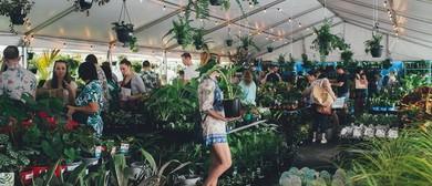 Indoor Plant Warehouse Sale – Springtime Splendour