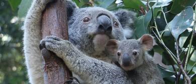 Koala Karnival