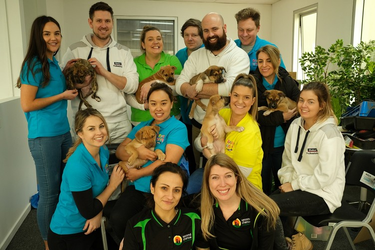 Pet Adoption Day Drive – Second Chance Animal Rescue - Melbourne -  Eventfinda