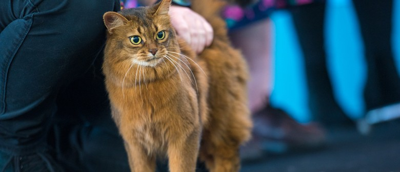 2019 Melbourne Cat Lovers Show