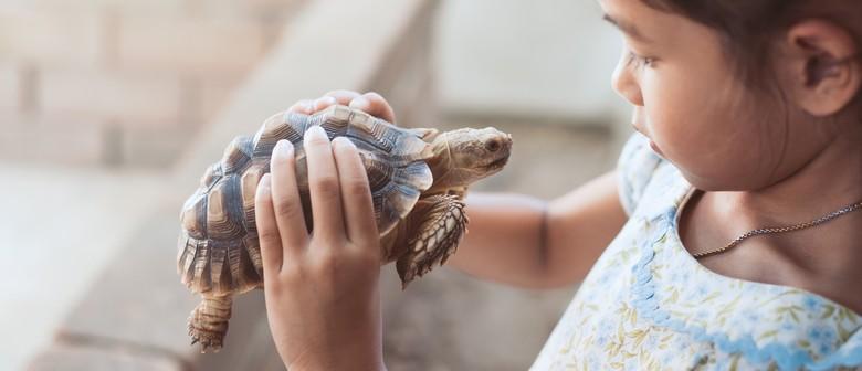 School Holiday Fun – Kids Mini Zoo