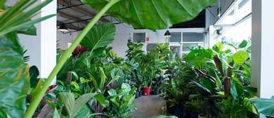 Indoor Plant Warehouse Sale – Tropicana Party