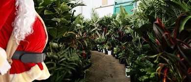 Indoor Plant Warehouse Sale - Christmas Bonanza