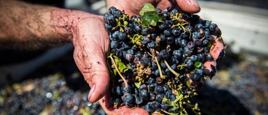 Harvest Grape Stomping