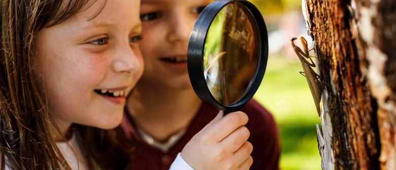 Junior Rangers: Insect Investigators