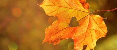 Mindfulness Selflessness & Compassion Retreat: Glen Svenson