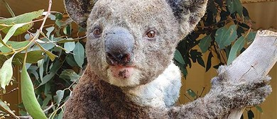 Dine and Donate for Koalas