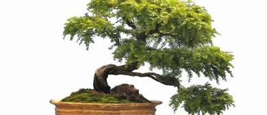 Australian Plants as Bonsai Exhibition and 8th Symposium