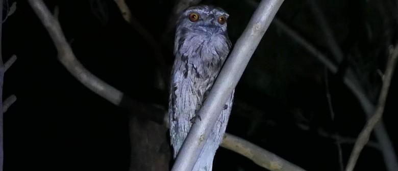 Spotlight Prowl for Kids