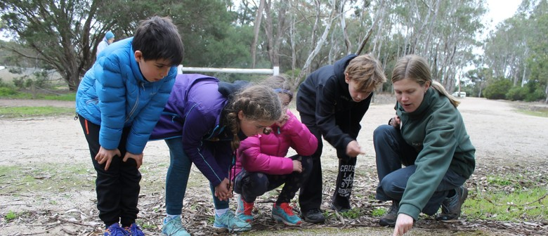 Junior Ranger Bush Detectives