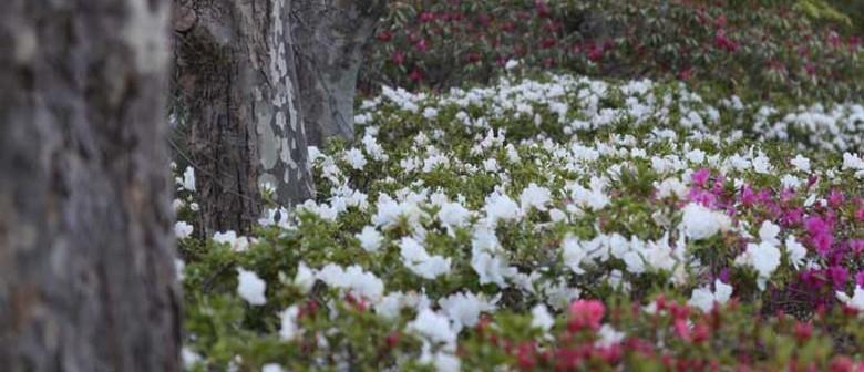 Leura Gardens Festival 2020: CANCELLED
