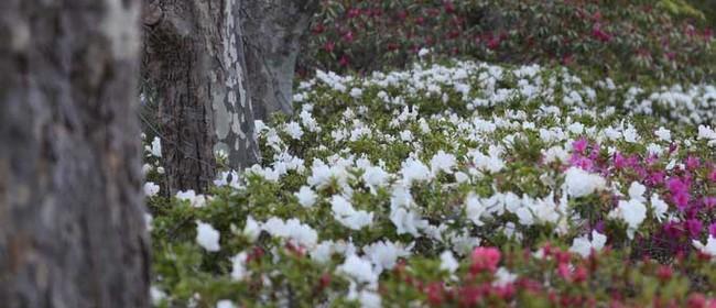 Image for Leura Gardens Festival 2020: CANCELLED