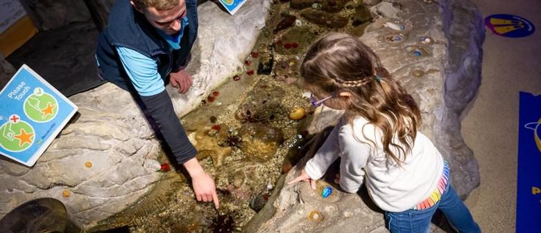 Explore the Rocky World 'Beneath the Tide'