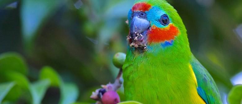 8 Day Bird Photography Workshop – Tropical North Queensland