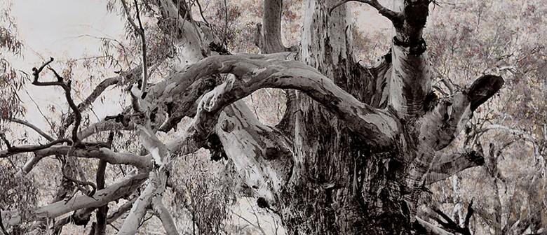 Tree Story