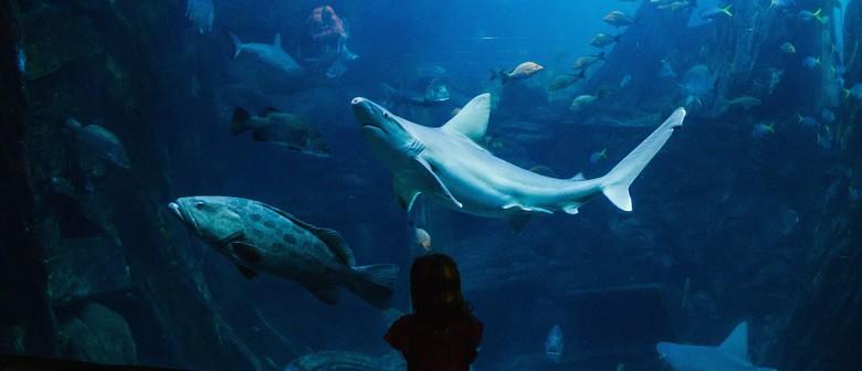 Discover Sharklife